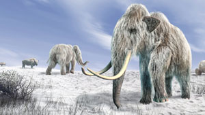 Mammoths in the snow